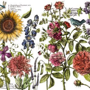 botanists journal transfer