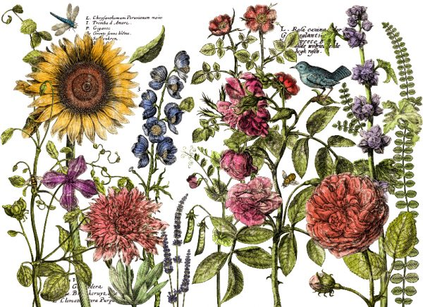botanists journal transfer