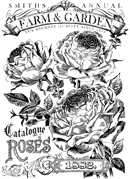 catalog of roses transfer