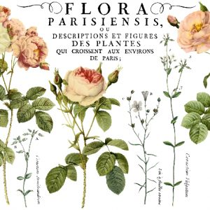 flora parisiensis transfer