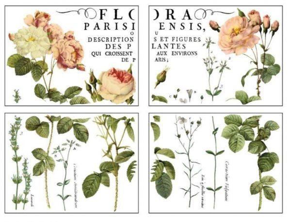 flora parisiensis pad Flora Parisiensis